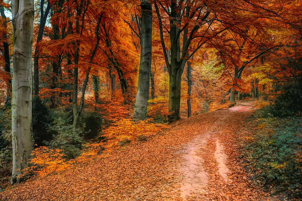 The most beautiful time of the year is Autumn